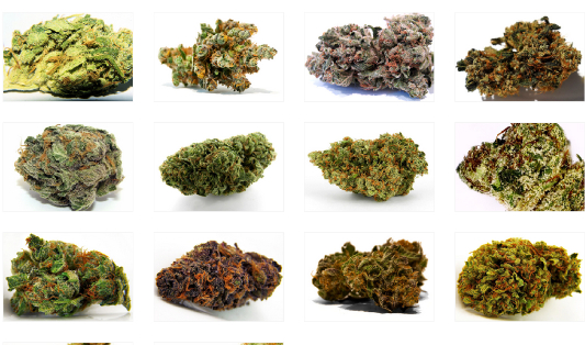 Choosing The Most Effective Cannabis Strains for Treating