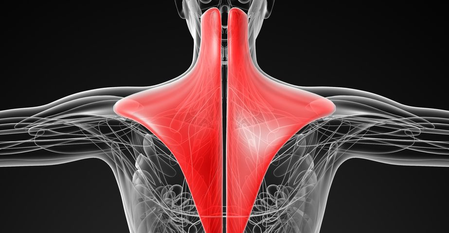 Pain Associated Proteins in Trapezius Muscles of Fibromyalgia Patients Higher