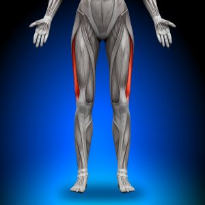 Fibromyalgia Pain Linked to Muscle Metabolites, Reduced by Exercise