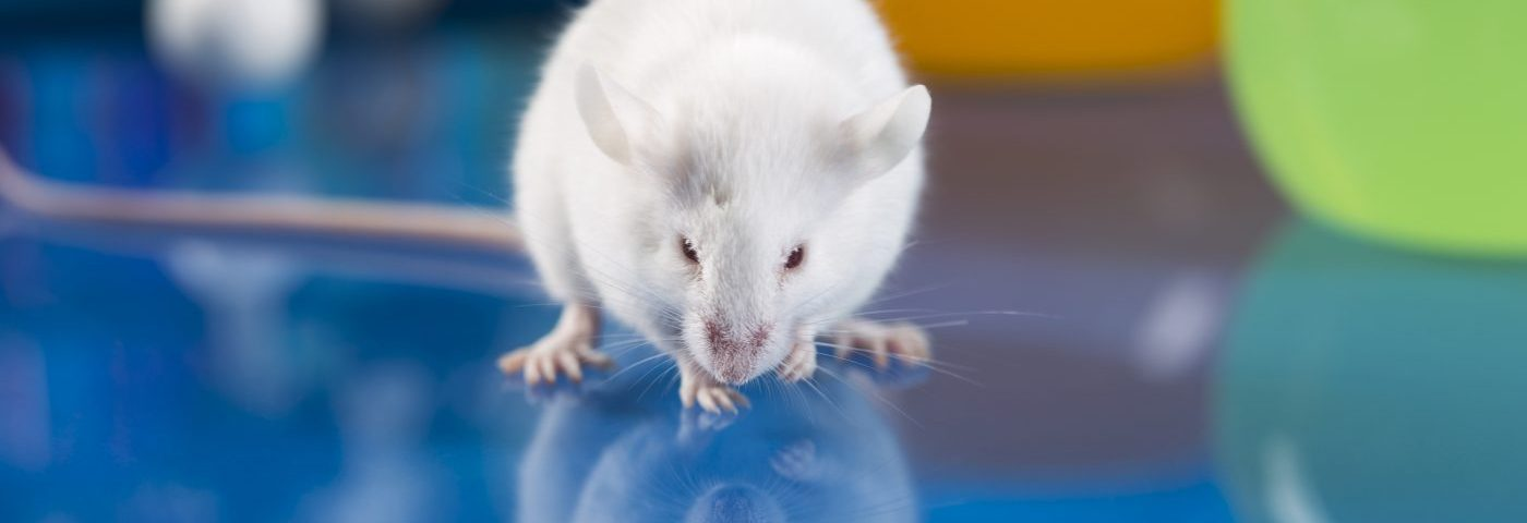 ASIC3 Protein May Be Involved in Development of Fibromyalgia Muscle Pain, Mouse Study Suggests