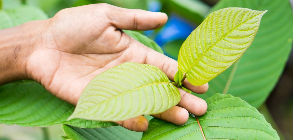 Exploring Alternative Medicine: I Tried Kratom